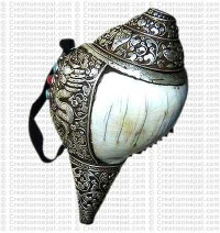 Silver-shell conch